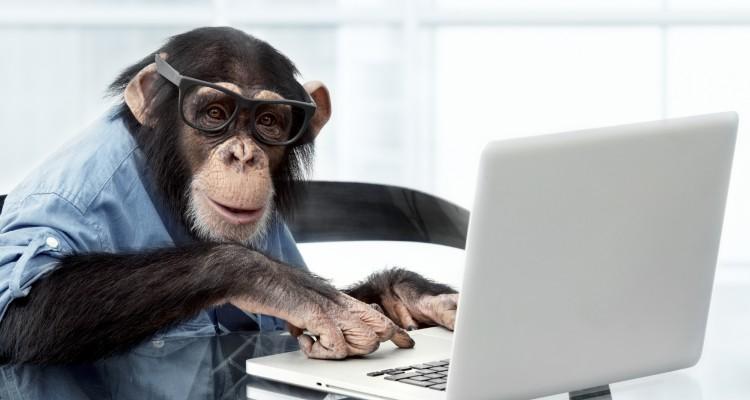Apina tietokoneella